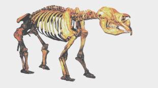 3-tonowy wombat na sterydach