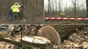 Wycinają 100 drzew pod budowę żłobka