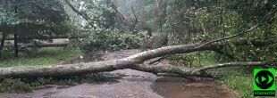 """""""Masa powywracanych drzew po burzy"""". Deszcz, grad i porywisty wiatr nad Polską"""