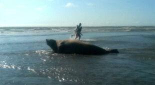Na jednej z kolumbijskich plaż pojawiły się mirungi