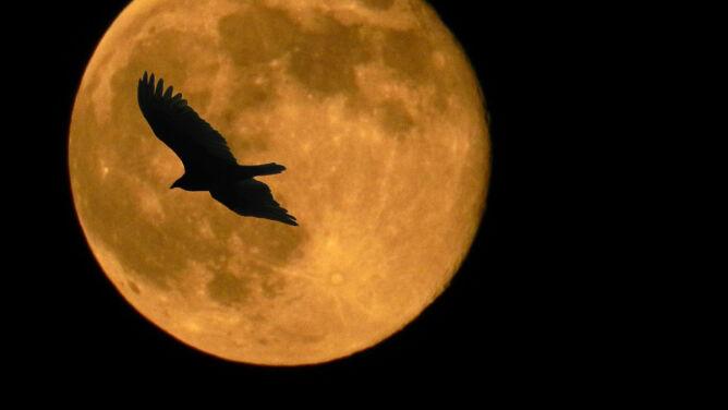 Zbliża się wyjątkowa superpełnia. <br />Księżyc będzie największy od 70 lat