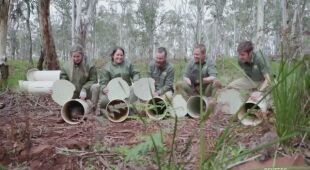 Diabły tasmańskie wróciły na kontynent australijski